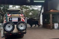 Nairobi-park-tours-landcruiser-30