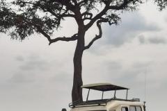 Nairobi-park-tours-landcruiser-31